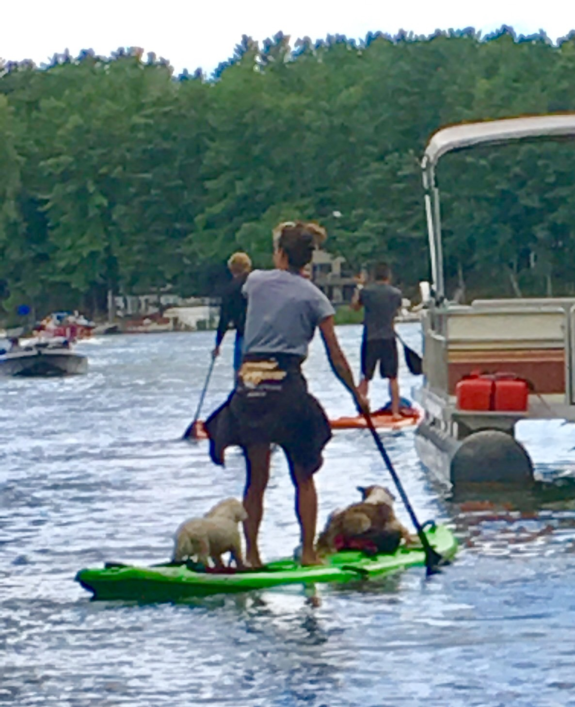 "Paddle Boarding Goes to ""Dogs"""